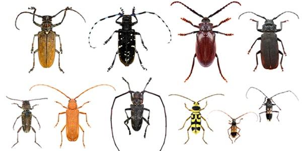 1 Elk Grove Pest Control | Sniper Pest Control | CA